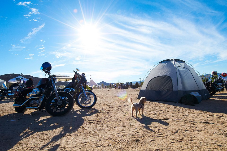 Daniella-Renee-Babes-Ride-Out-Harley-Davidson-Joshuatree-moto